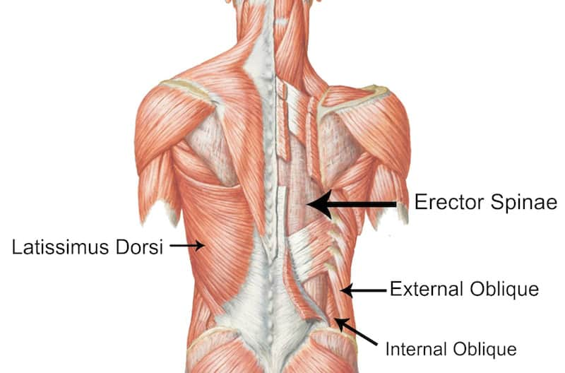 core back muscles